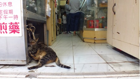 Cats laze in front of shop entrances