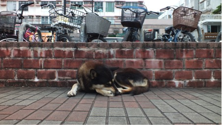 Dogs explore the Hong Kong streets