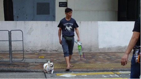Dogs are often walked through the city streets