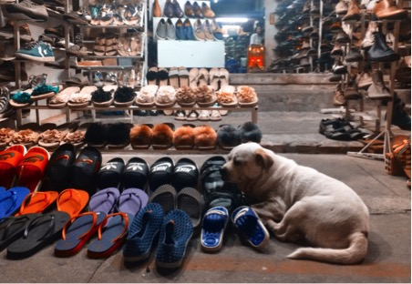 Dogs laze in markets in the city