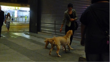 Dogs often greet people happily
