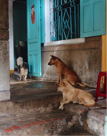 Dogs stand proud in Hong Kong