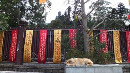 Dogs laze all over Hong Kong
